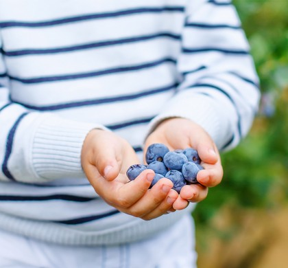 Antioxidants: How they Improve Information Processing, Attention and Retention