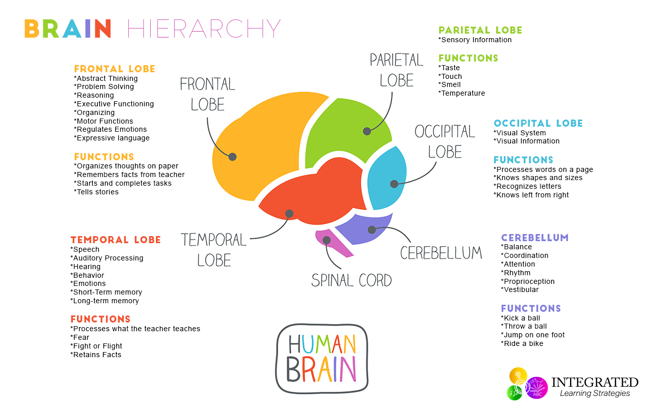 Diagram: Brain Structures And Functions Diagram