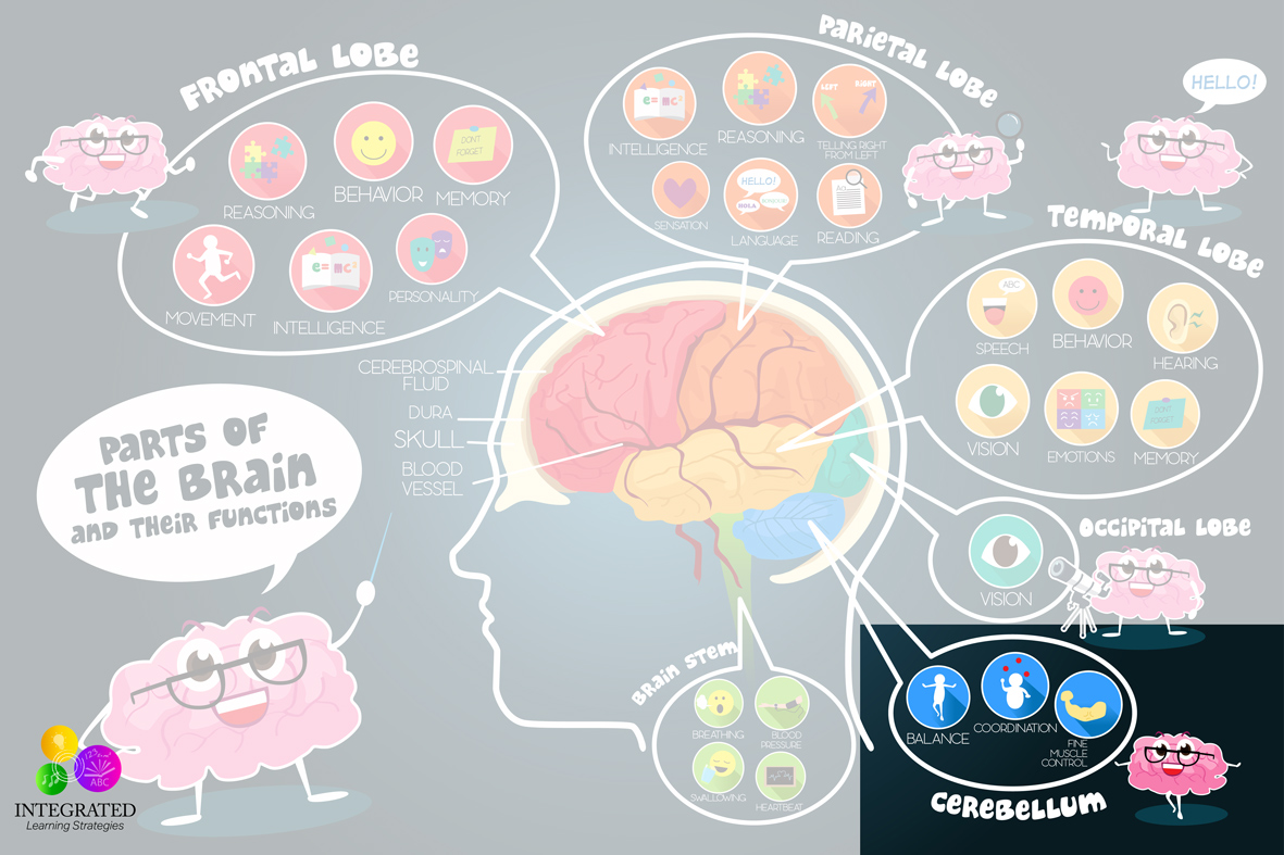 Cerebellum signs of motor planning delays if your child for What is motor planning