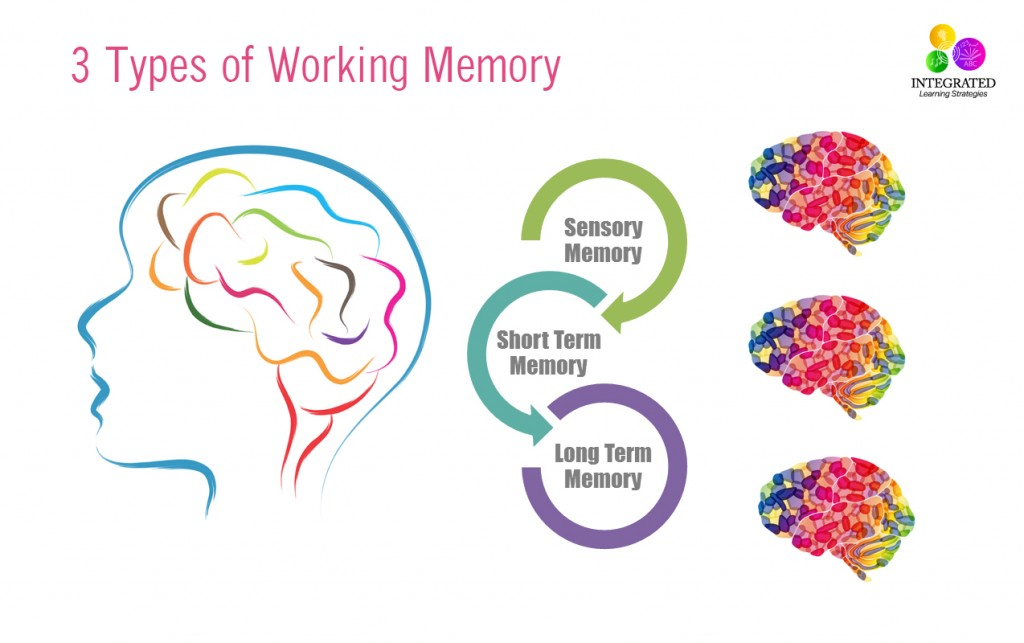 Types of Memory: Working Memory Tied to Your Child's Intelligence | ilslearningcorner.com