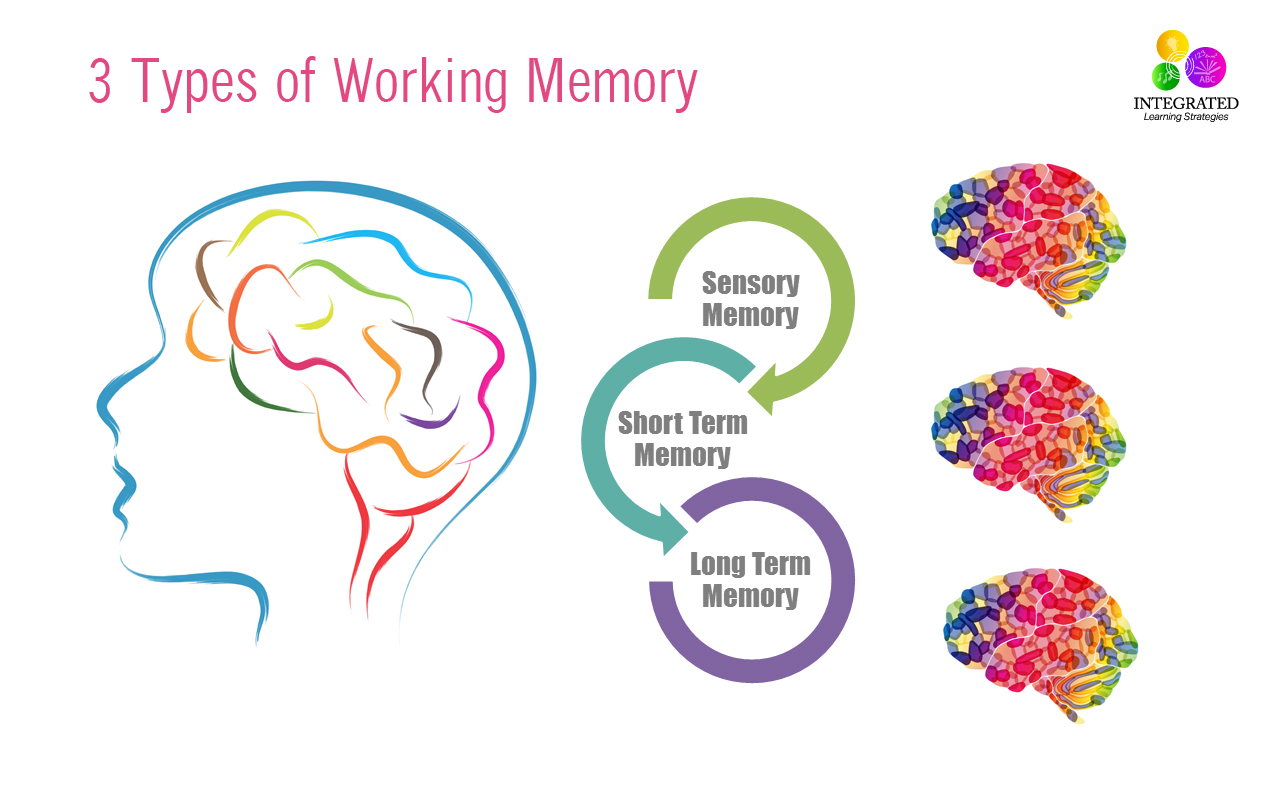 Types Of Memory Working Memory Tied To Your Childs Intelligence